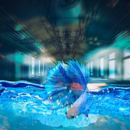 freetoedit animal underwater ircemptytrain emptytrain