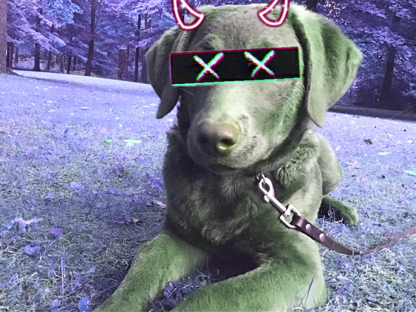 #swag #redo #epic #dog #cute @picsart #xxx #demon #horn #x #xmas #naruto #remix #hot #tags #roblox #ear #doc #cute #port #gatcha #anime