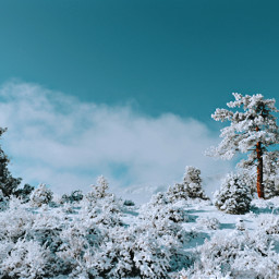 winter landscape snow trees sky blue white nature cloud clouds aesthetic california wilderness travel photography bush bushes shrub brown freetoedit remixit