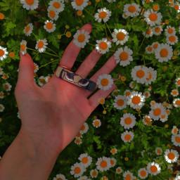 другг домпаразитов aestethic эстетика индикид indiecore indieaesthetic core flowers indiekid aesthetic