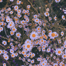 flowers photography summer flowerphotography green nature colorful vintage art interesting cute freetoedit