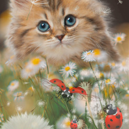 cat catedits catlover cutecat daisies dandelion flowers freetoedit