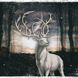 freetoedit myedit night sky stars woods moose fxeffects maskeffects picsart madewithpicsart