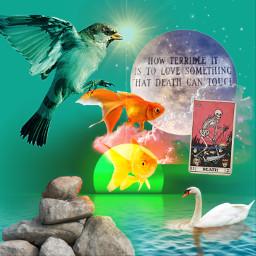 freetoedit nature quote fish bird tarot death lifecycle moon swan rocks water