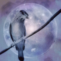 freetoedit edited bird nature artistic mask madewithpicsart