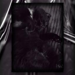 cat mycat catinmyhouse cute cutecat followme freetoedit