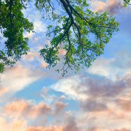 freetoedit interesting clouds beautifulscenery tree branches sky