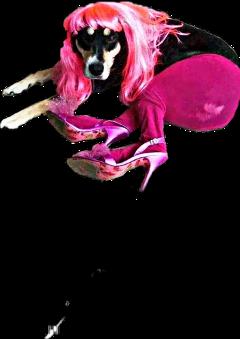 dog dogs perras perroloco perrosexy perromeme perroni perrogracioso perrochistoso freetoedit