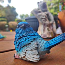 bird garden freetoedit