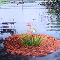 picsart art nature creative ameisen remixit remixed freetoedit