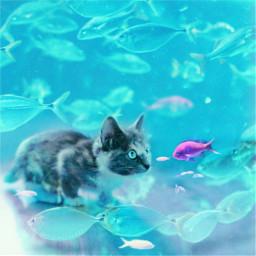 cat dreaming underwater fish kitten magic surrealart madebyme