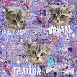 freetoedit cat cats catedit purple complex complexedit purpleaesthetic sour souralbum souroliviarodrigo jealousyjealousy brutal traitor