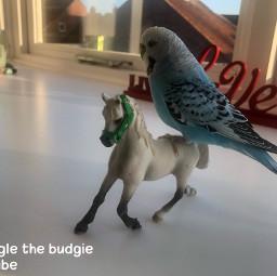 schleichhorses horseriding googlethebudgie budgies