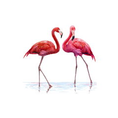 flamingoea freetoedit