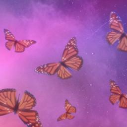 freetoedit butterflies cute butterfly beauty pink pride