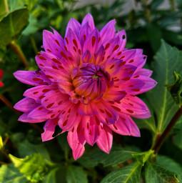 freetoedit splashofredonpink summersplashchallenge summerflowers pinknred redonpink gardenforever flowerpower growone forestwalk inthevalley srcinacircle inacircle