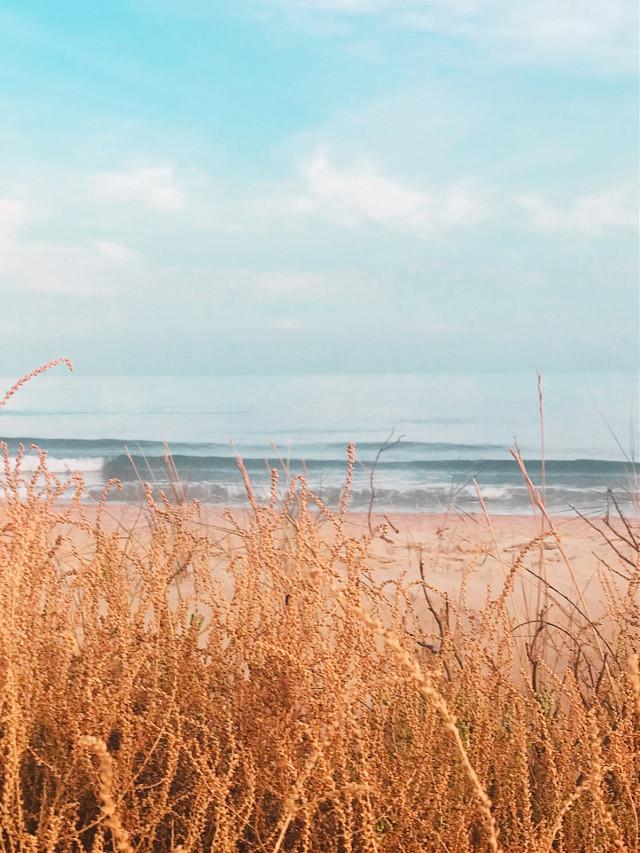 #nature #summertime #beachscenery #dunes #beachdunes #wildplants #seaview #calmwaves #horizon #blueskyandclouds #beautifuldays #summervibes #beachmood #lowangleshot #beachphotography