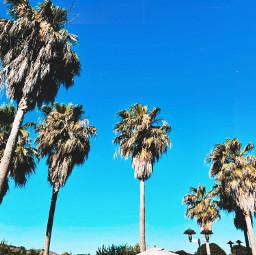 freetoedit palmtrees trip vacation calm pcmydreamdestination mydreamdestination