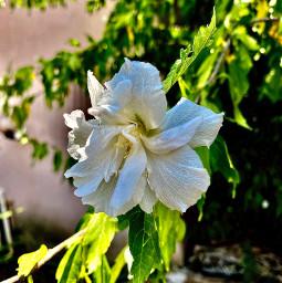 freetoedit white nature