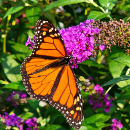 photography colorful nature butterfly freetoedit