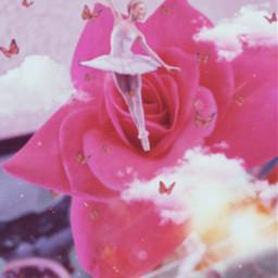 rose freetoedit