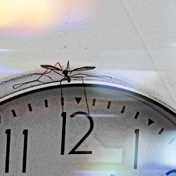 insect daddylongl freetoedit