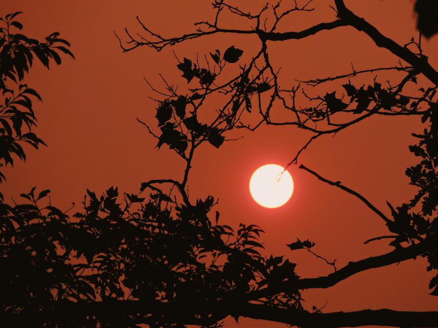 #sunset#orange#glow#sun#atardecer#hazy#featurless#tree#shadow#details#halloween#mysterious#sunny#july