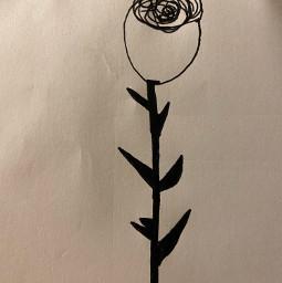 drawing rose art interesting
