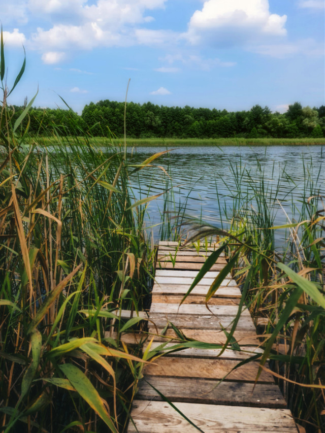 #summer #summervibes #summetime #lake #bridge #grass #watergrass #summerday #beautifulnature #beautifulday #naturephotography #naturebackground