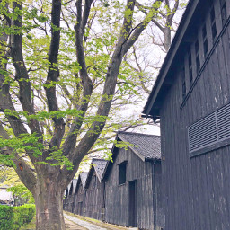 tsuruoka japan architecture warehouse tree alley pcmydreamdestination mydreamdestination