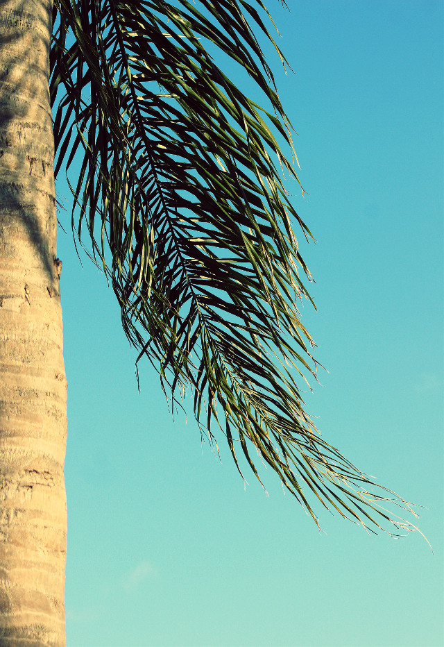 When you're in a position to help someone,                                                 always do it                                                                                  beacause that's the universe answering                                 someone else's prayers through you…                                        …………………………….☀️……………………………..                                       #nature #minimalisminnature #tree #palmtree #palmleaf #blueskybackground #summertime #beautifulsunnydays #warmweather #summervibes  #lowangleview #natureshot #minimalphotography