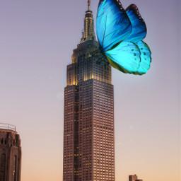 butterfly city