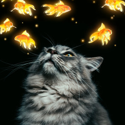 freetoedit cat cats fish fishes