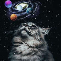 cat galaxy sky shine magic purple blue pink freetoedit