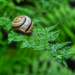 freetoedit photography snail nature green closeup