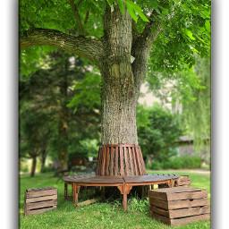 tree trees morning nature walnuttree walnut lohme bestplace bplove romantic