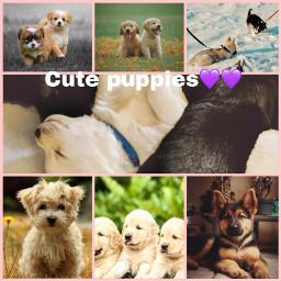 freetoedit puppies puppydogeyes puppylove pup