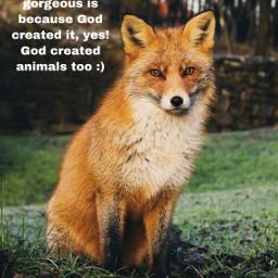 freetoedit foxes fox foxesrule cute foxesarecute foxesarebeautiful godcreatedanimals godcreatedeverything eee