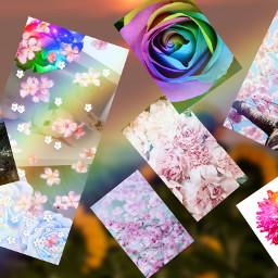 freetoedit unsplash picsart floralobjects