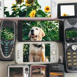 freetoedit dog nokia oldphone happy sunflower summer cutedogs srcvintagephones vintagephones