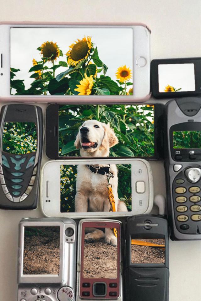 #dog #nokia #oldphone #happy #sunflower #summer #cutedogs