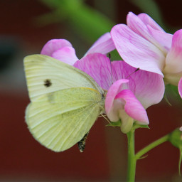 photography macro flower colorful closeup