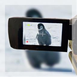 freetoedit penguin camera cute art edit rccameramemories cameramemories