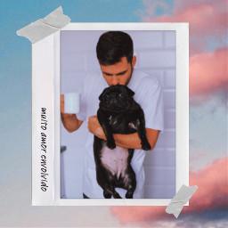 pug fotoinstantanea moldura pet dog cachorro amor freetoedit replay picsartreplay polaroid