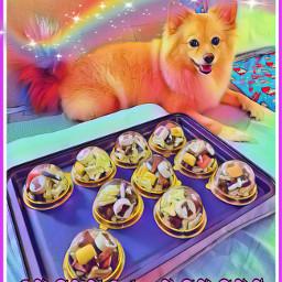 freetoedit dog snacktime hanabi