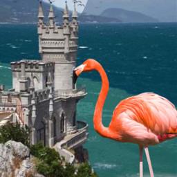 freetoedit flamingo birds ocean castle beach moon planers mountain