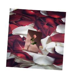 freetoedit rosepetals rose