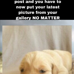freetoedit puppy awwww lovepuppy