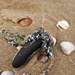 photography closeup beach shells freetoedit