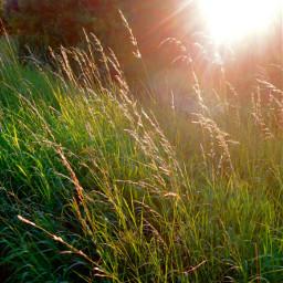 morning sunshine field freetoedit